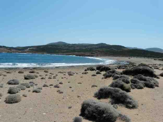 Η παραλία στο Παλαμάρι, όπου φύεται το παράλιο κρινάκι στη μέση του καλοκαιριού.